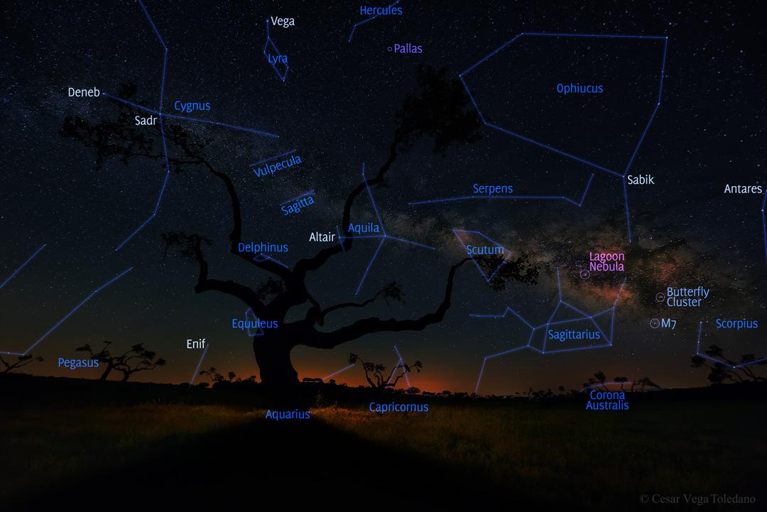درخت کهکشان