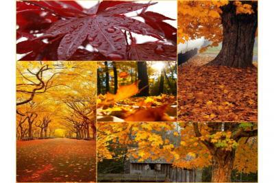پاییز  (بررسی تحلیلی پاییز از منظر علم نجوم)