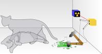 پارادوکس گربه شرودینگر
